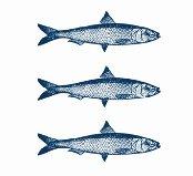 logo 3 sardinas